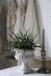 Jeanne d'Arc Living bloempot, klein